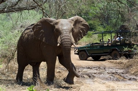 Safari Express - Parc Kruger